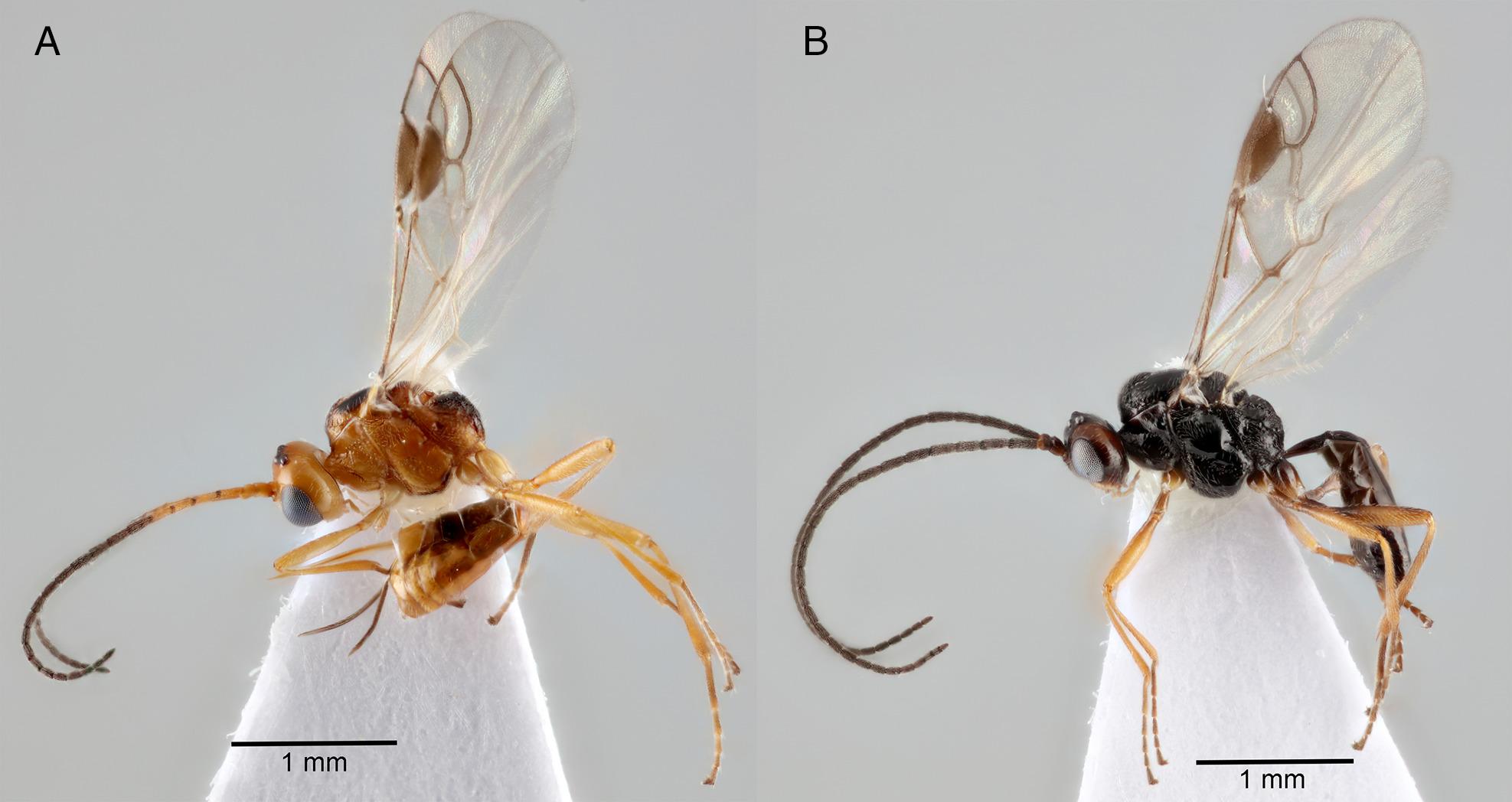 parazita rovar a máj méregtelenítésére