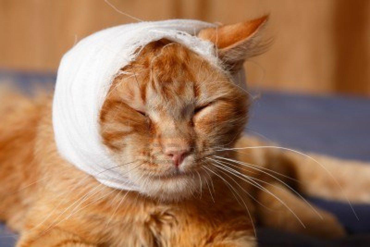 🐈 13 tünet a macska száj daganata - hogyan kell kezelni