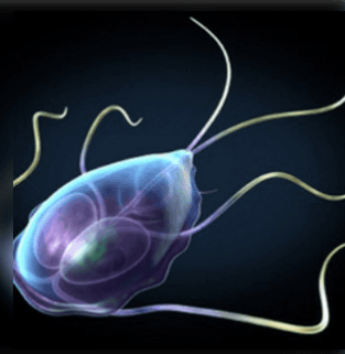 dr. House esetei – Echinococcosis | notafa.hu