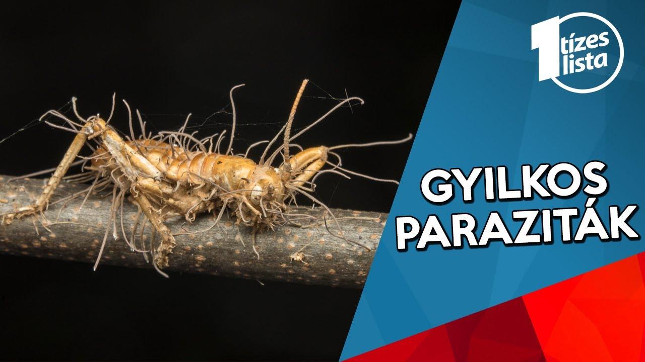 hogyan lehet megszabadulni a parazitáktól t pinworm népszerű név