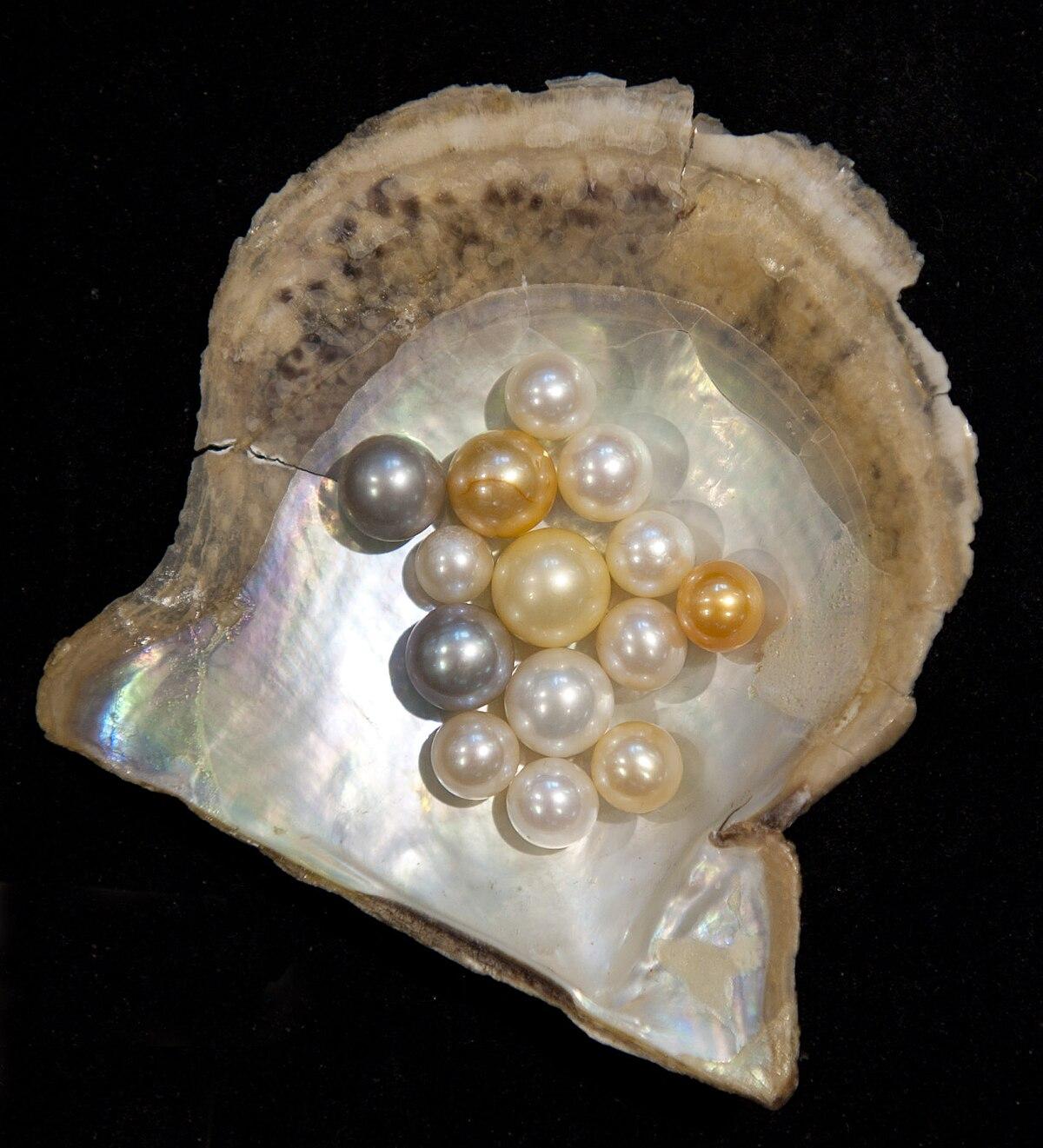 A gyöngyök szépségében már évezredek óta gyöngyörködünk. A tenyésztett gyöngyök élete