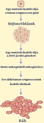 hasi rák génje
