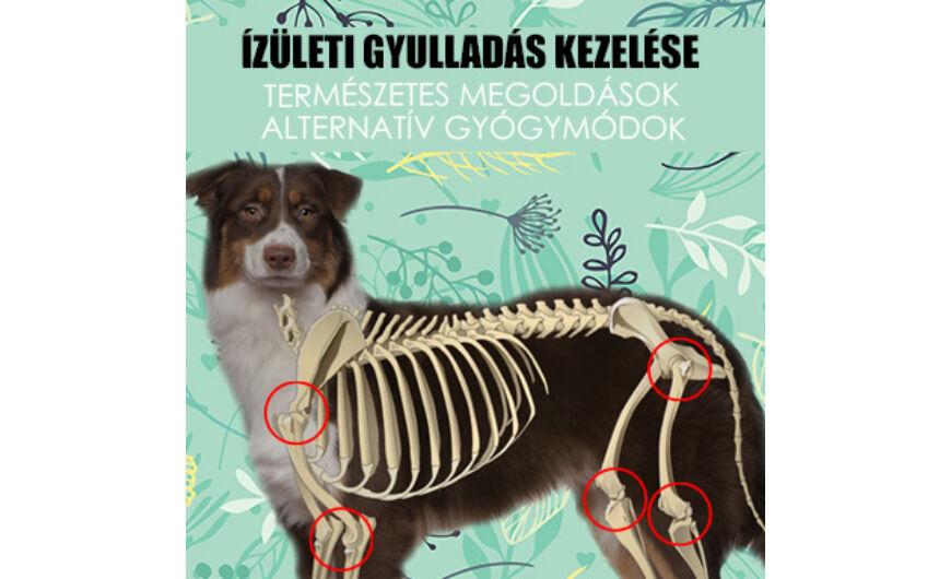 papilloma kutya természetes gyógymódok)