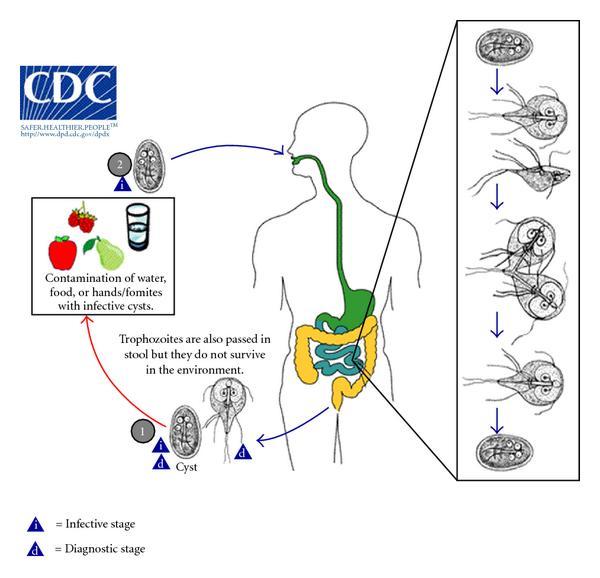 a giardia zoonózis