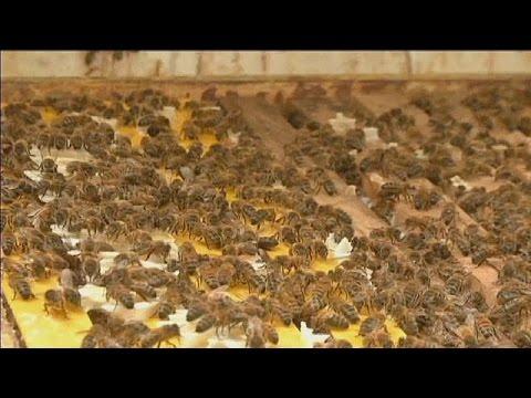 Zhvg: Méhcsalád költözött az Agrárminisztériumba | notafa.hu