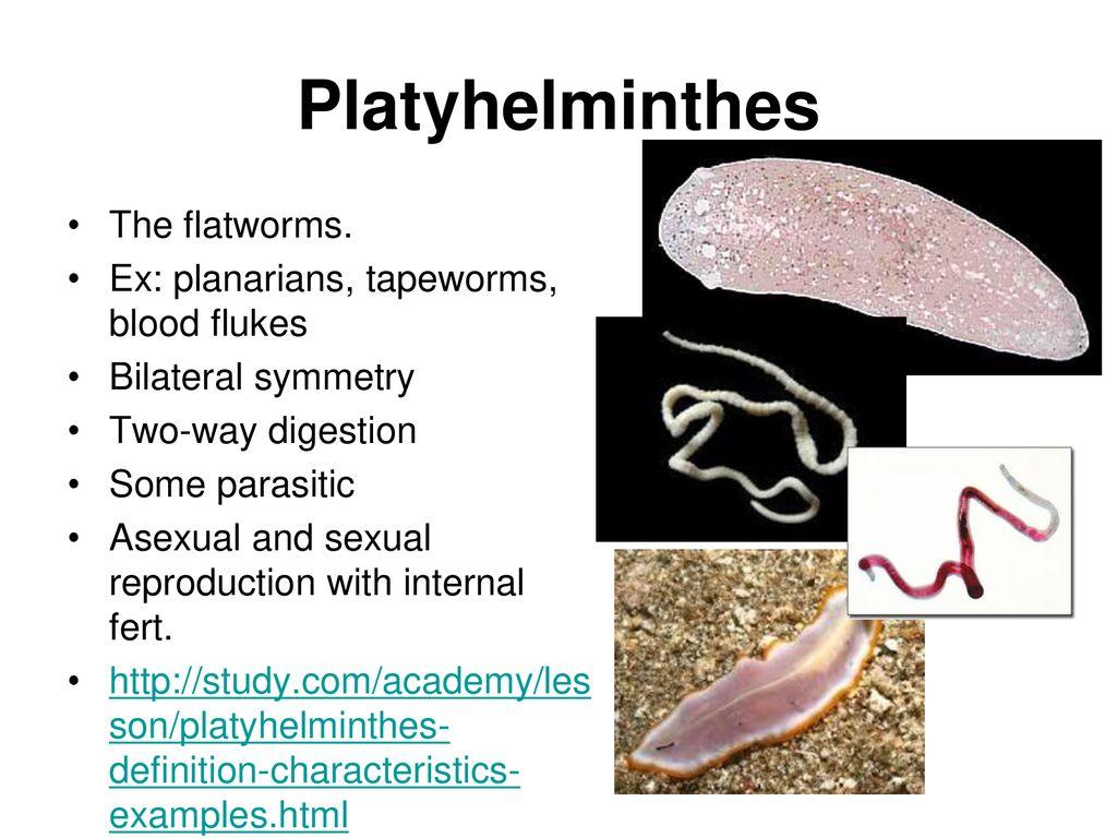 Platyhelminthes coelom típusú. Tünetek férgek kezelésével