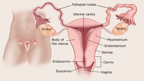 Hétköznapi tünet jelzi a gyakori ráktípust - Egészség | Femina