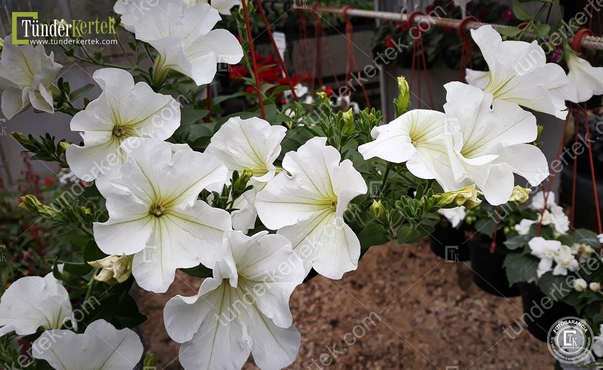 Fehér lerakódás lepte el a virágfölded? Így szabadulhatsz meg tőle