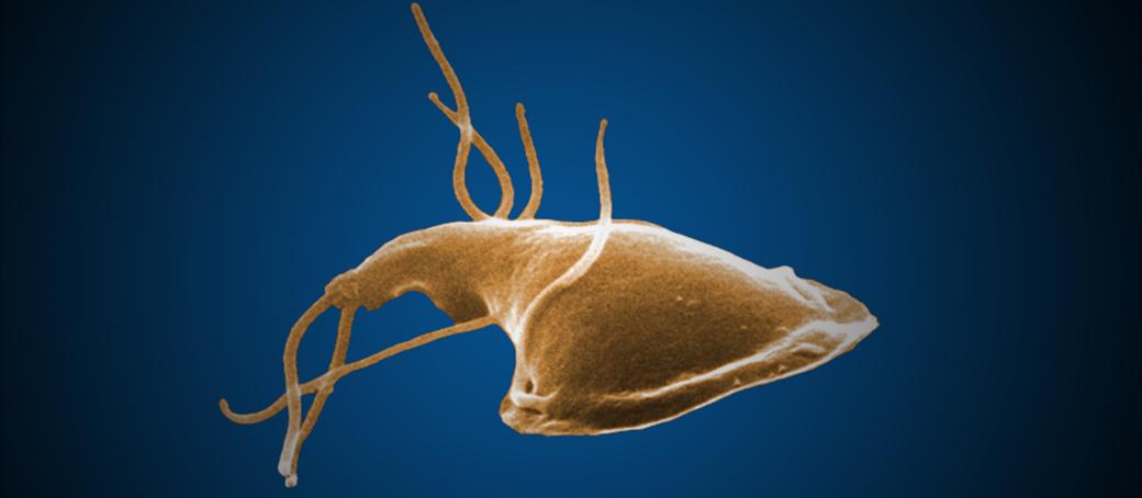 giardia parasiet mens
