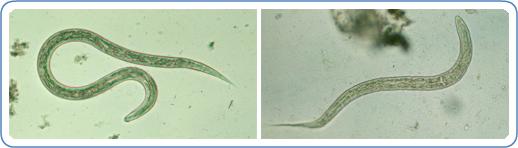 Maxxis Hookworm 20