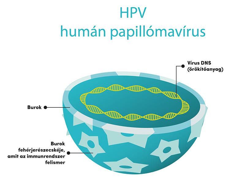 kenet jelenléte papillomavírus