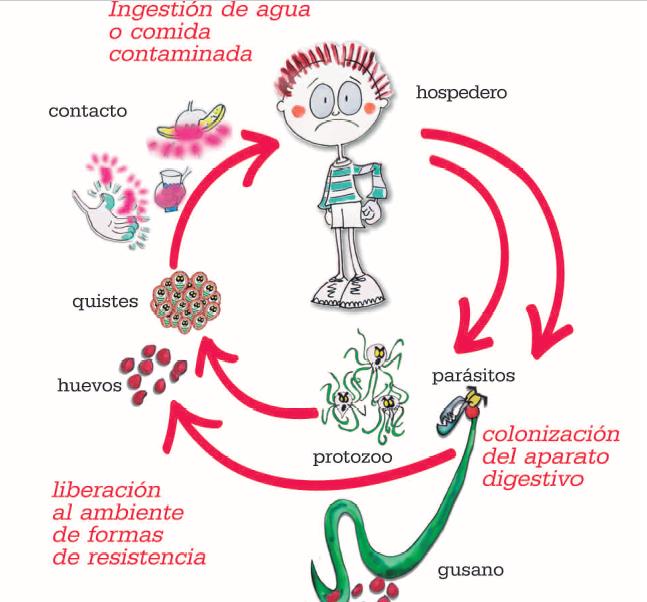 Tratament giardia albendazol, Oxiuros sintomas e tratamento - Formula Rio Pedi Atria