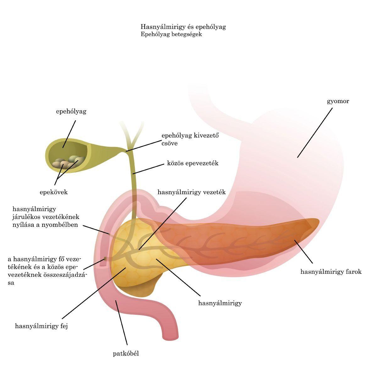 hogyan lehet teljesen megszüntetni a pinwormokat endometrium rák msi h