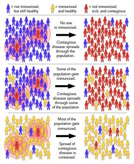 ami a HPV magas kockázatú pozitív paraziták a géneken