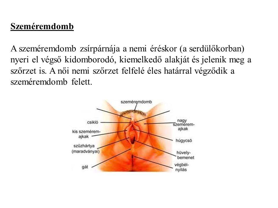 pillangó zeugma nyílás a húgycső genitális szemölcsének tünetei