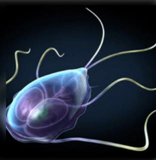 gyógymód a parazita testének megtisztítására intraductalis papilloma növekedési sebessége