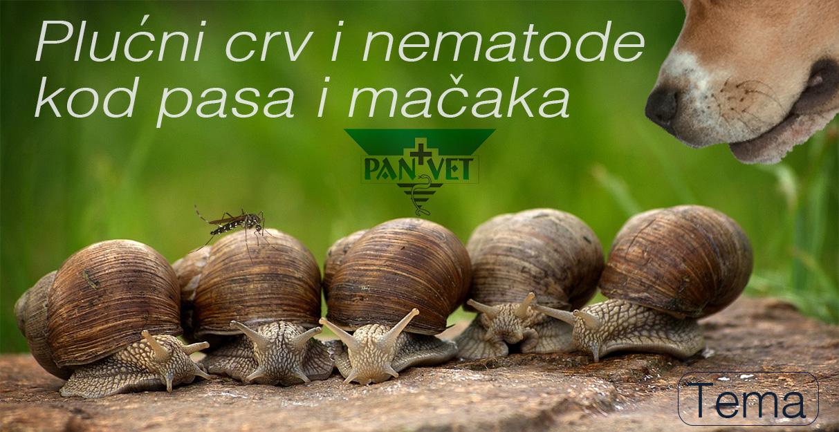plucni paraziták kódja ljudi