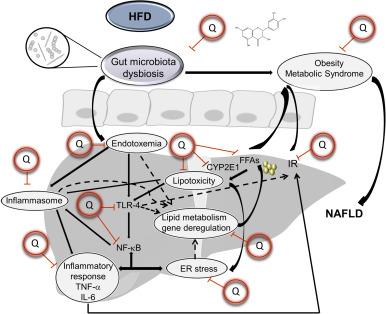 Bio-Kult kapszula - 30db - VitaminNagyker webáruház