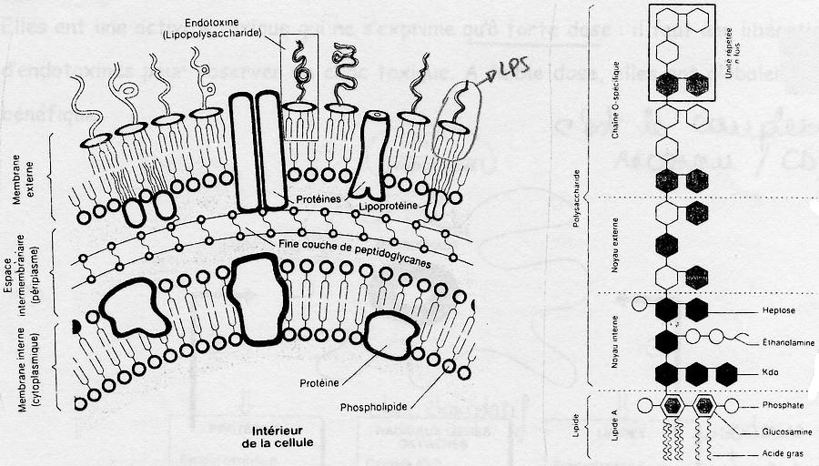 toxin por részecske svt pinworm parazita